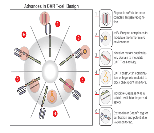 Advances in CAR-T cell design
