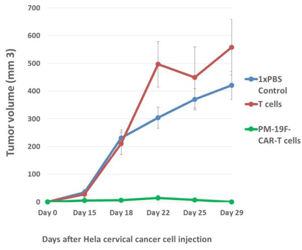 Animal research case study indicating tumor growth after hela cervical cancer cell injection