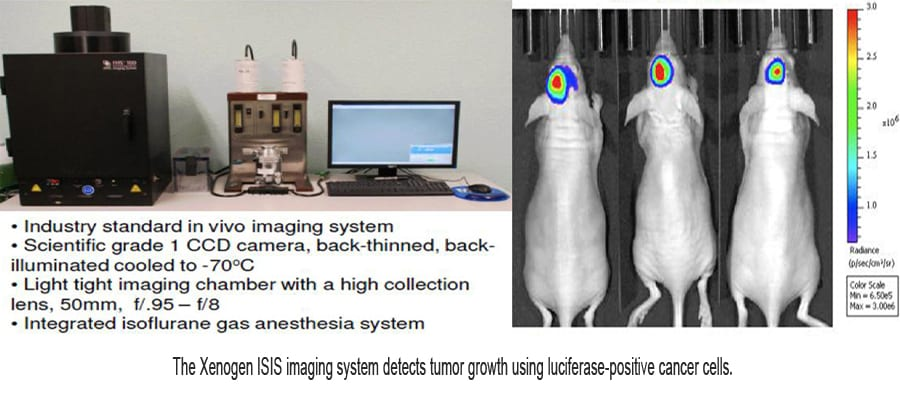 The Xenogen ISIS in vivo imaging system detects tumor growth using luciferase-positive cancer cells