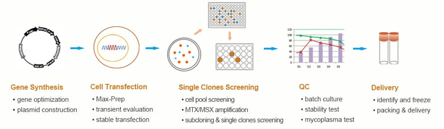 Generation and identification of expression positive clones