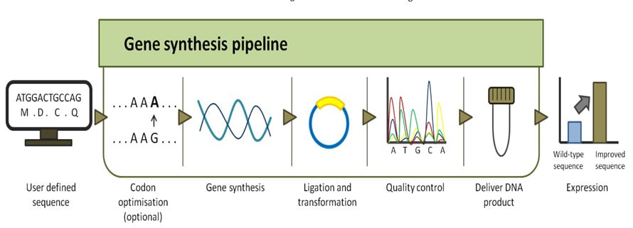 Gene sythesis pipeline