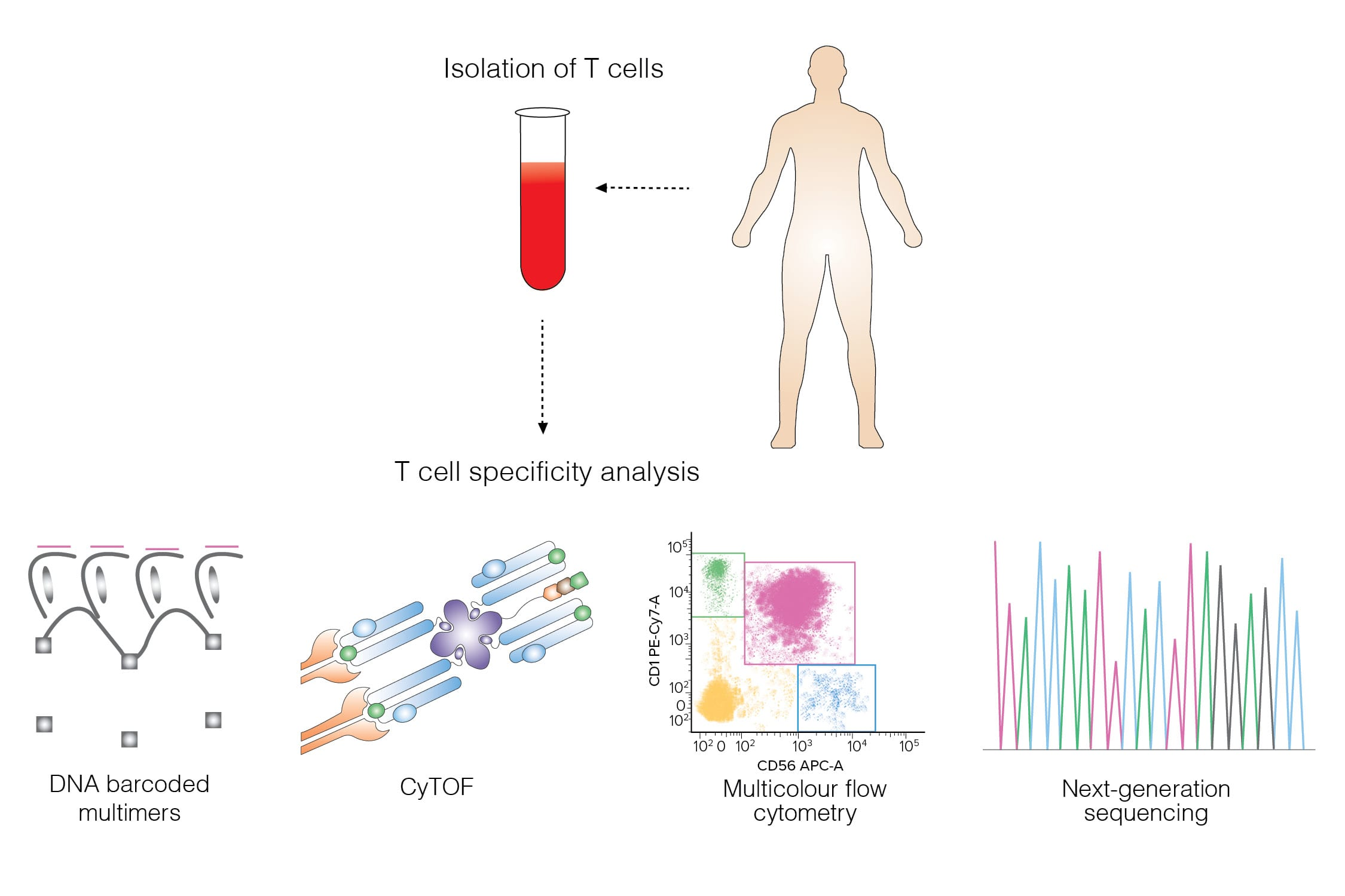T Cell Specificity Assay -imag1_10-16-2020-final