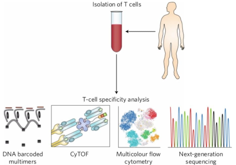 T cell specificity profiling